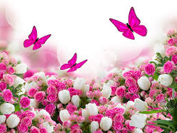 butterflies roses tulips flowers many