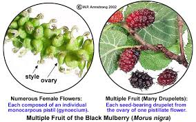 Where Is The Pollen Produced In A Flower - fruit terminology part 4