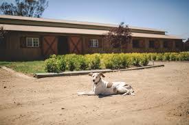 dog barn gallery kilham farm events nicasio ca