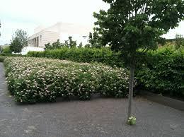 earth tones native plant nursery landscaping and garden center