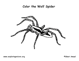 spider coloring wincy halloween jumping spider wolf
