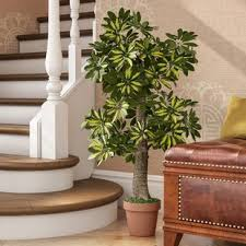 living room trees artificial trees you ll love wayfair