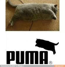 Puma Meme - puma meme by lightdot3 memedroid