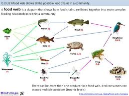 bioknowledgy c 2 communities and ecosystems