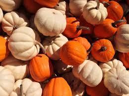 small pumpkins discover pumpkin varieties