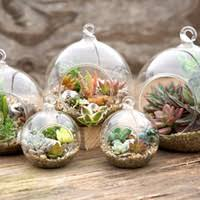 wholesale hanging glass terrarium buy cheap hanging glass