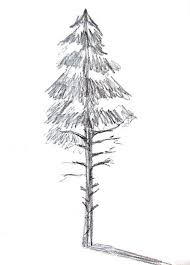 16 best δέντρα images on pinterest drawing trees drawings and draw
