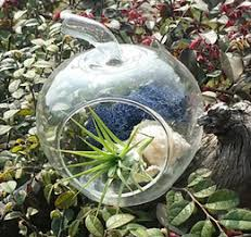 glass pear terrarium glass pear terrarium for sale