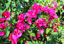 florida u0027s thorniest native plants phillip u0027s natural world 1 0 3