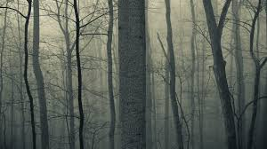spooky screensaver haze tag wallpapers page 2 forests fog trees fall dark creepy