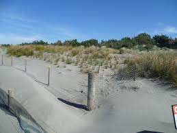 Home Decor Stores New Zealand File Sand Dunes At Spencer Park New Zealand Jpg Wikimedia Commons