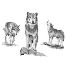 royal u0026 langnickel sketching made easy large kit wolves joann