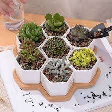 succulent planters set of decorative geometry hexagon white ceramic succulent plant pot