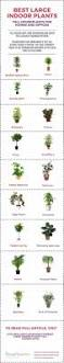 Best Indoor Plants Low Light by Tall House Plants Low Light Darxxidecom