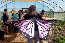 butterfly festival celebrates butterfly house in