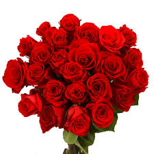 forever roses globalrose fresh red roses 75 extra long stems forever young