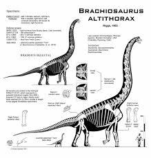 brachiosaurus drawing draw8 info
