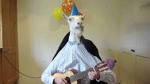 happy birthday from jemima the goat youtube