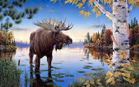 1080 best for the love of moose images on pinterest moose