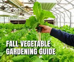 Texas Vegetable Garden Calendar by Fall Vegetable Gardening Guide For Texas