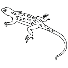 desert lizard coloring page lizard coloring captivating lizard coloring page for your seasonal
