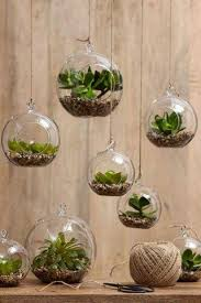Hanging Succulent Planter by 6pcs Set Hanging Air Plant Terrarium Moss Succulent Planter