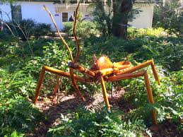 assassin bugs miss smarty plants