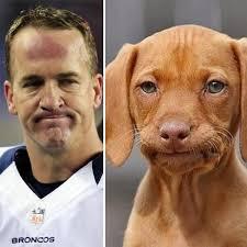 Payton Manning Meme - is peyton manning s legacy tainted zone coverage