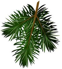 pine tree clipart pine needle pencil and in color pine tree