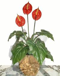 Deals On Home Decor by Anthurium Flower 21