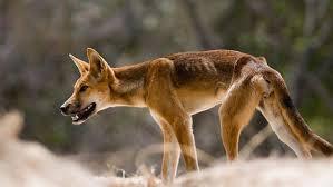 imagenes animales australia la fauna mortífera de australia oceania ocholeguas elmundo es
