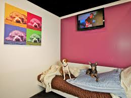 in suites d pets hotel brings luxury for dogs business insider
