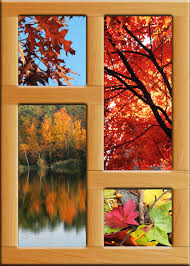 free images wood leaf flower glass pond color season