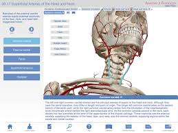 Anatomy And Physiology Study Tools Anatomy U0026 Physiology Learn Anatomy Body Facts Study Reference