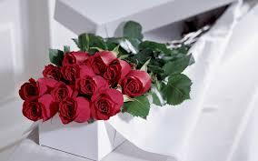 dozen of roses dozen roses