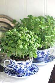 Diy Herb Garden The 25 Best Diy Herb Garden Ideas On Pinterest Indoor Herbs