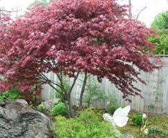 the 5 best ornamental trees for ontario dutchmanslandscaping