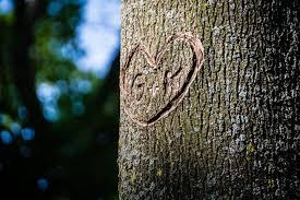 initials carved in tree initials carved in tree laidback gardener