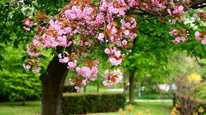 spring wallpapers hd free download 60 wallpaper wiki