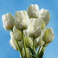 white tulips fresh white tulips for tulip bouquets global