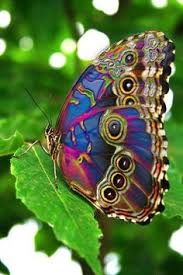 what are true bugs butterfly moth and insects