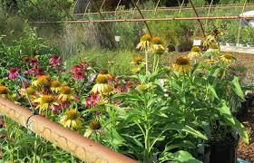 adkins arboretum nursery about the plant nursery