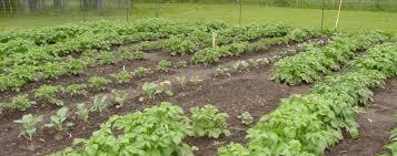 anchorage community gardens
