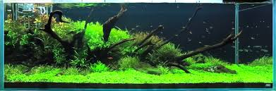 Ada Aquascaping Ada Aquascaping Without Amano Aquascaping World Forum
