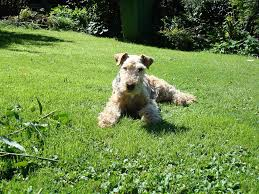 Dog Friendly Cottages Lake District by Dog Friendly Cottage Keswick Dog Friendly Cottage Lake District