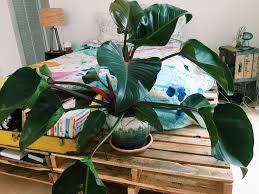 biggest house plants transforming a space through houseplants your biggest fan grace