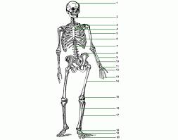 bones of the body purposegames
