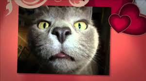 funny cat names for girls youtube