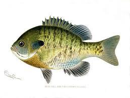 94 printable fish fishermen images fish art