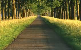 imagenes lindas naturaleza imagenes de naturaleza lindas en hd gratis para descargar 4